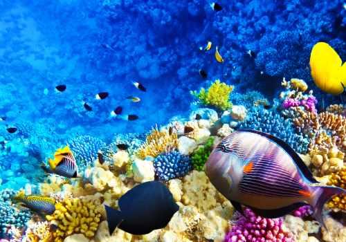 Das Red Sea Hotel Siva Sharm Resort in Sharm El Sheikh